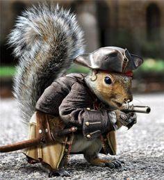 pirate-squirrel